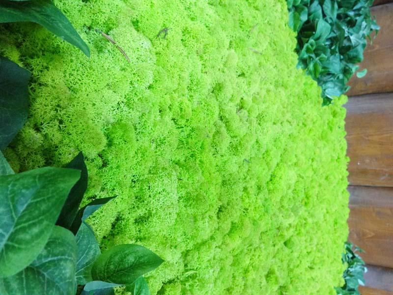 Зелен интериор в минерален басейн