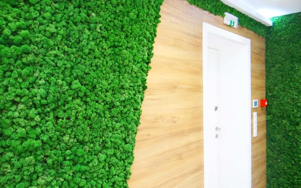 Зелена стена от тревисто зелен мъх в дерматологична клиника
