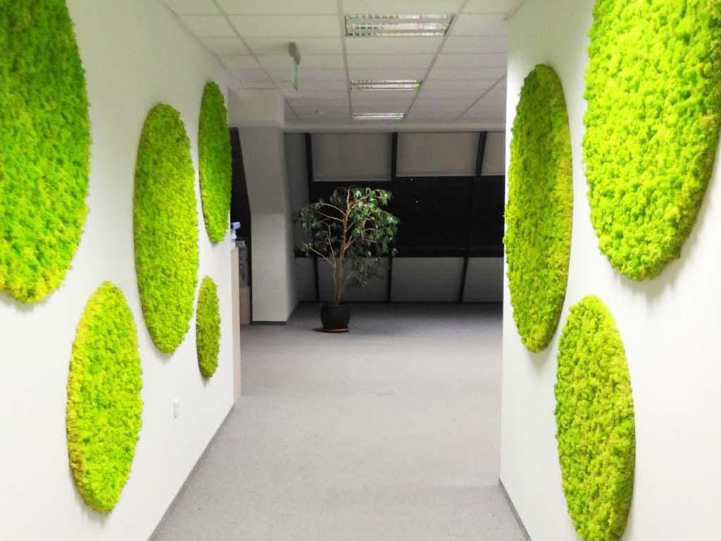 Полярен мъх MOSSdecor в офис в град Варна